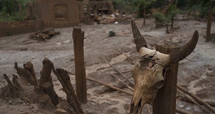 Uma calavera de boi colocada em uma cerca em Paracatu, MG, em 13 de outubro de 2016. Paracatu fica na zona atingida pela lama da barragem da Samarco