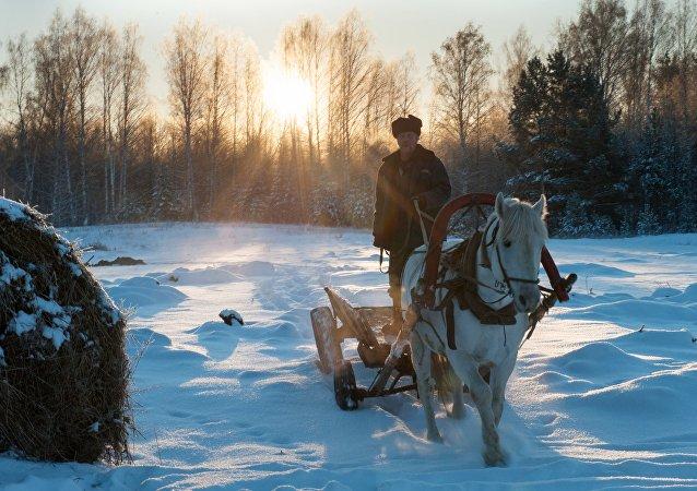 Carruagem na aldeia de Berezovka, Região de Tomsk