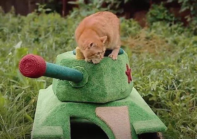 Russo constrói casa em formato de tanque para seu gato
