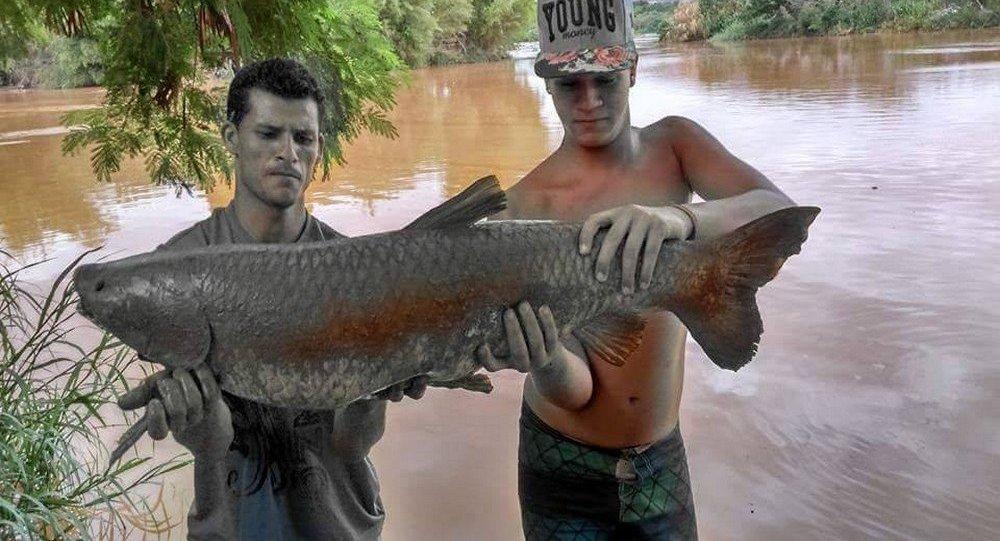 Peixes cobertos de lama após a tragédia