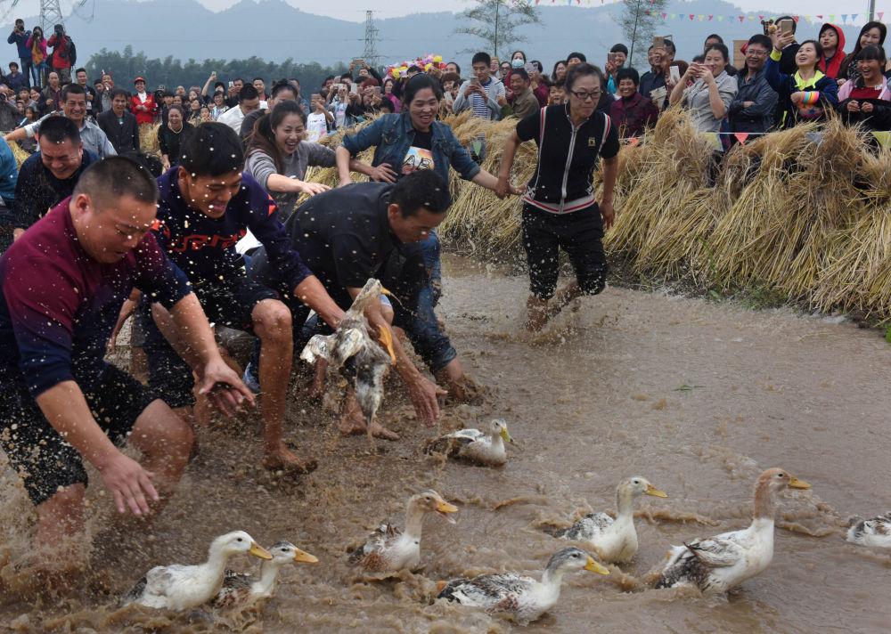 Moradores da cidade chinesa de Wuyi, na província de Zhejiang, tentam pegar patos durante um jogo tradicional