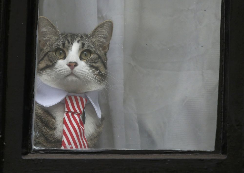 O interrogatório do fundador do Wikileaks, Julian Assange, em 14 de novembro foi marcado pelo aparecimento de seu gato na janela da embaixada do Equador em Londres e a total ausência de notícias sobre o decurso do próprio interrogatório