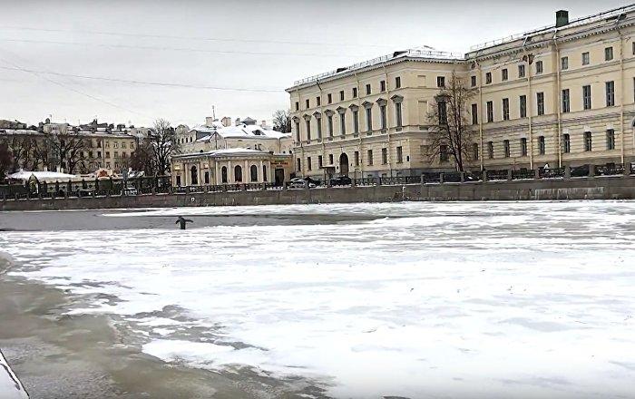 Pinguim no centro de São Petersburgo