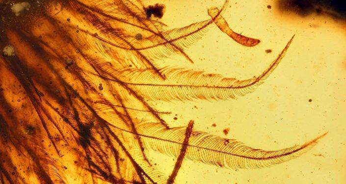 A prova de que dinossauros tinham penas está contida em um pedaço de âmbar.