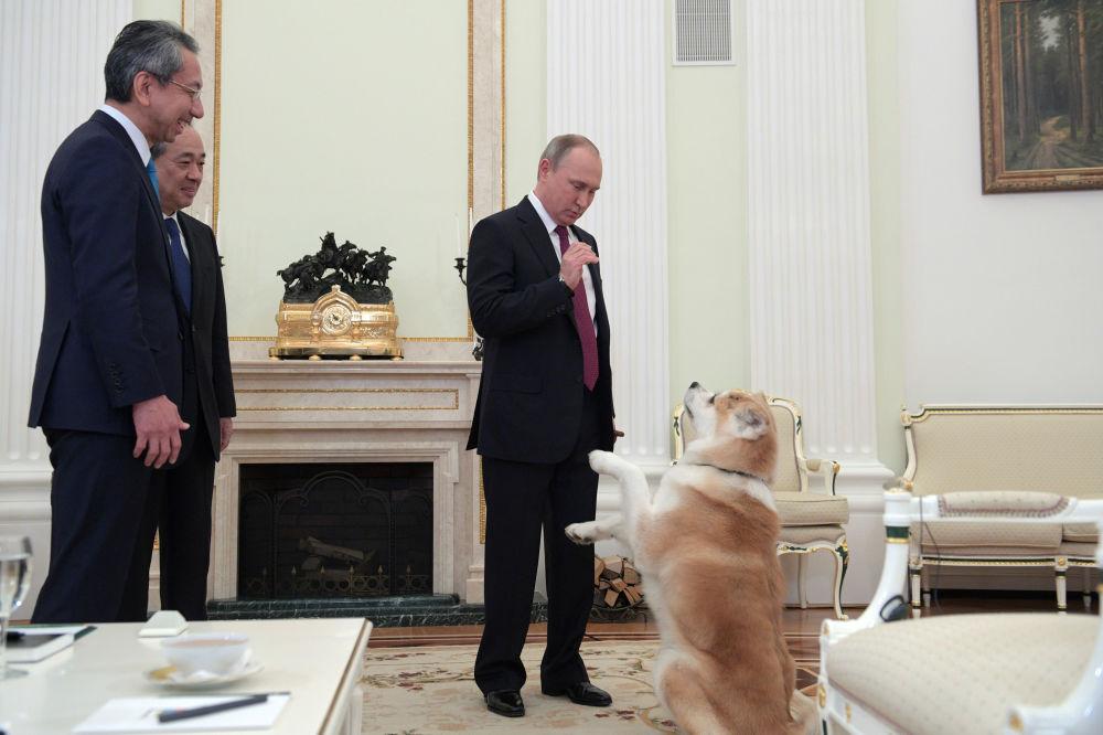 Presidente russo Vladimir Putin com sua cachorra Yume durante uma entrevista ao canal de TV japonês Nippon (mais conhecido como NTV no Japão) e ao jornal Yomiuri na véspera da visita ao Japão