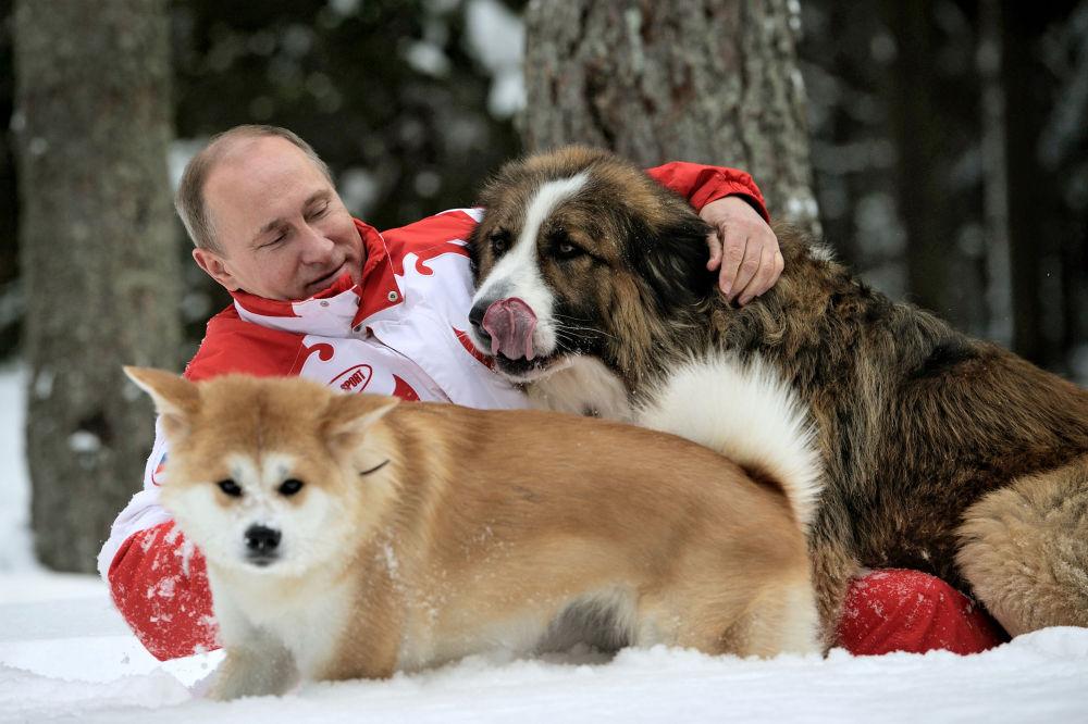 O presidente russo Vladimir Putin com cães Buffy e Yume durante um passeio na região de Moscou. Buffy é de raça karakachan (tipo de pastor) e Yume é akita inu