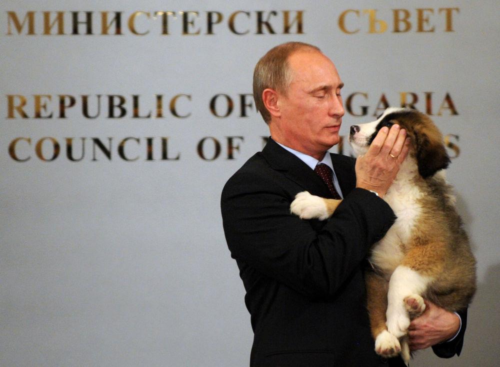 O primeiro-ministro da Rússia Vladimir Putin com um cachorro de raça karakachan, que foi um presente do chefe do governo da Bulgária Boyko Borisov