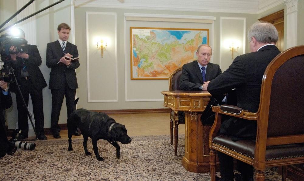 Labrador Koni do presidente russo participa do encontro entre Vladimir Putin e o governador da república russa de Komi Vladimir Torlopov na residência de Novo Ogaryovo