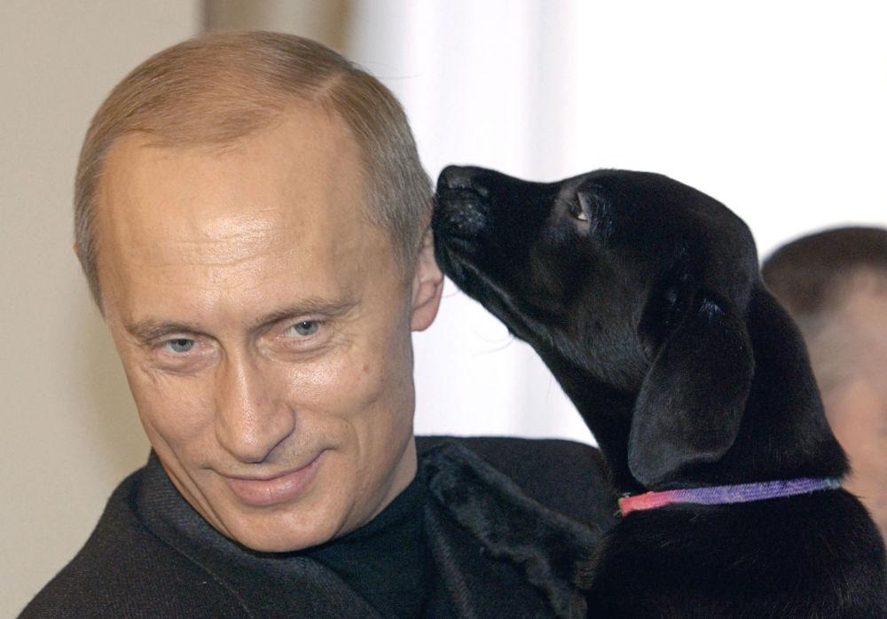 O presidente da Rússia Vladimir Putin com um cachorro da sua cadela de raça labrador Koni