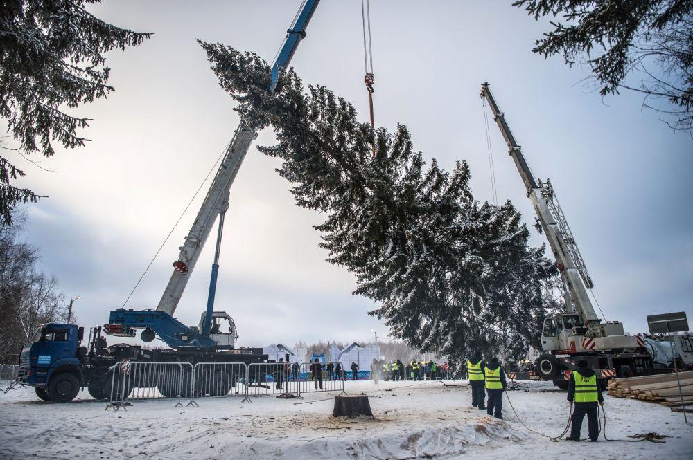 Transporte da maior arvore de Natal da Rússia