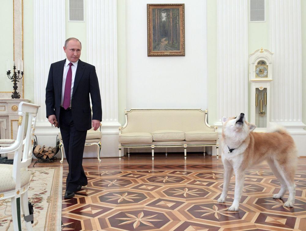 Presidente da Rússia, Vladimir Putin, com sua cadela Yume no Kremlin