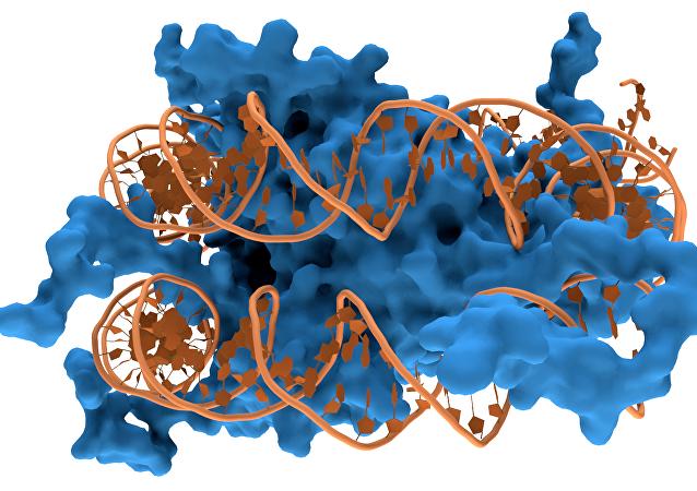 Uma cadela de ADN