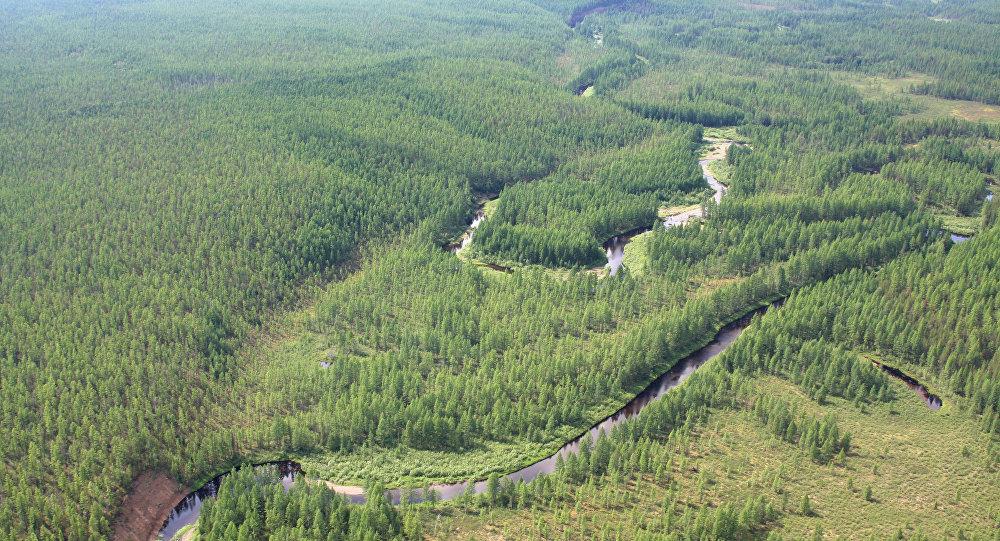 Floresta perto do lugar onde aconteceu Evento de Tunguska. (File)