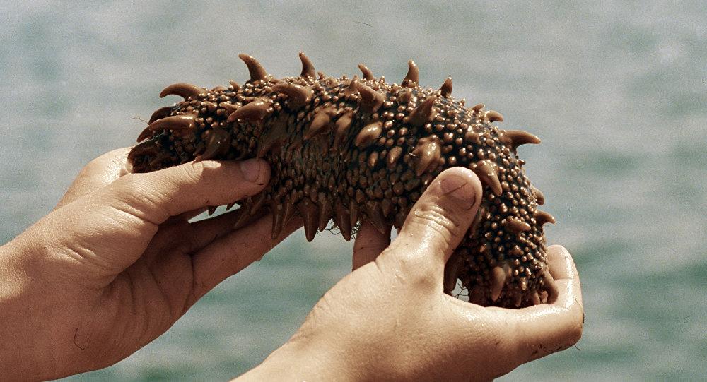 Pepino do mar