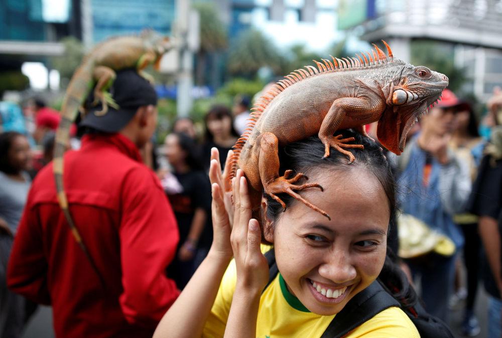 Mulher segura uma iguana durante uma reunião no clube de répteis em Jakarta, Indonésia.