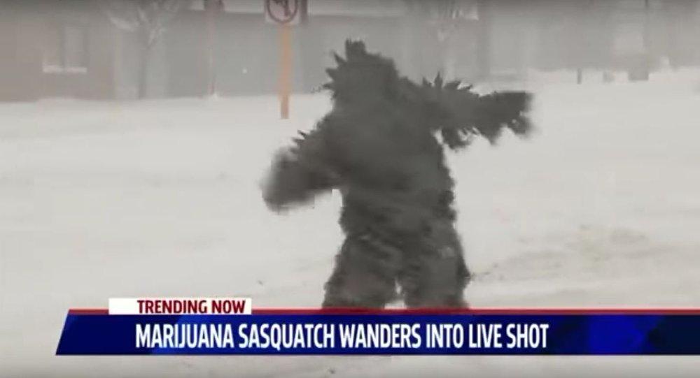 Ieti que apareceu durante a nevasca na scidade norte-americana de Springfield