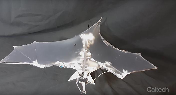 Drone Bat Bot que pode subir e voar para cima e para baixo que nem um verdadeiro mamífero noturno