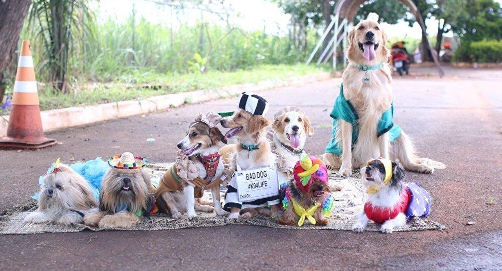 Carnapet, carnaval de cachorros agita Brasília