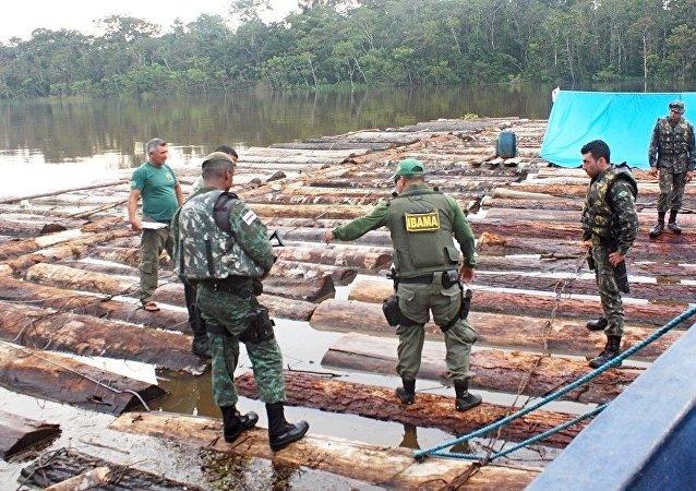 Apreensão de toras na fronteira com o Peru em operação que envolveu Ibama, Exército, Funai, PF e PM do Amazonas