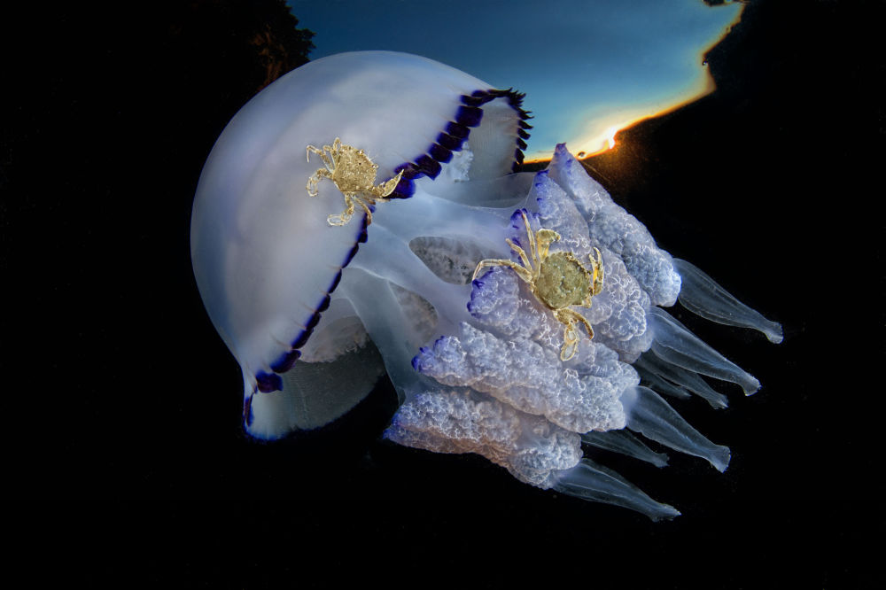 Vencedores do concurso Fotógrafo Subaquático do Ano revelam beleza aquática mundial