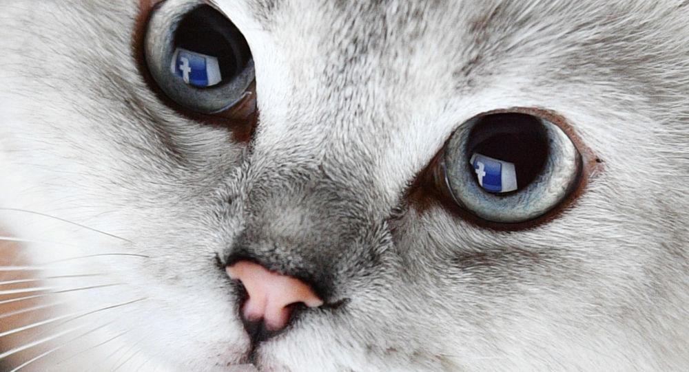 Reflexão do logo da Facebook nos olhos de gato