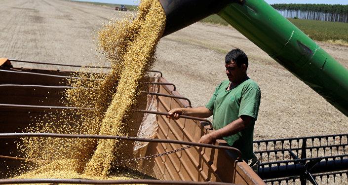 Soja é uma das principais commodities brasileiras