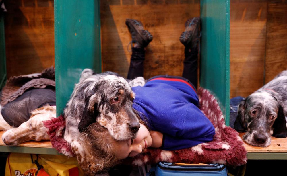 Participantes do principal concurso de cachorros Crufts Dog Shom em Birmingham, Reino Unido