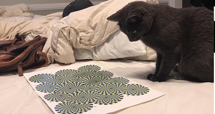 Gato vira louco com uma ilusão ótica