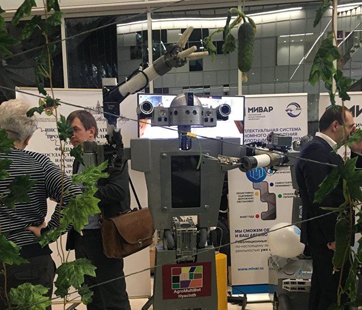 Robô AgroMultiBot Hyacinth sabe fazer a safra de pepinos