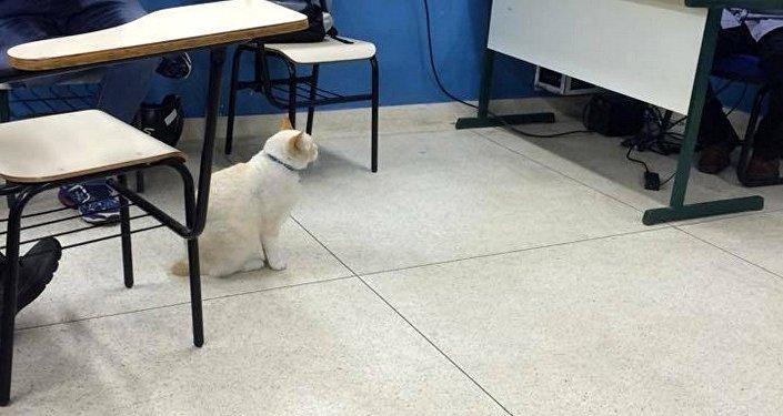 Branco atento a aula de Direito Tributário com o Professor Paulo na Fatec