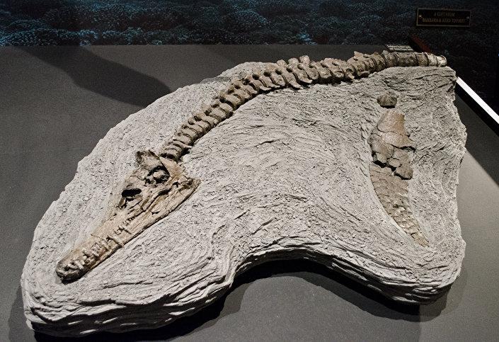 Restos de um pliossauro
