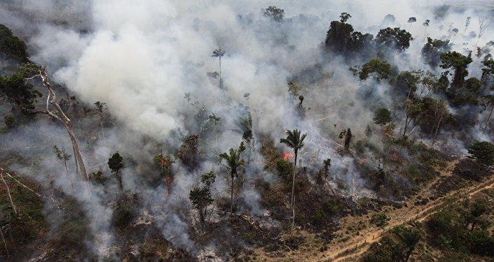 Desmatamento voltou a crescer na Amazônia nos dois últimos anos