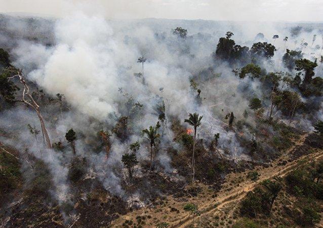 Desmatamaento da Amazônia (foto de arquivo)