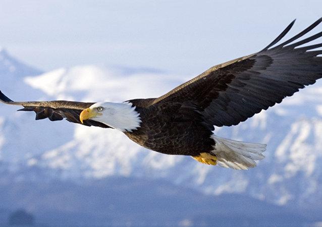 Uma águia