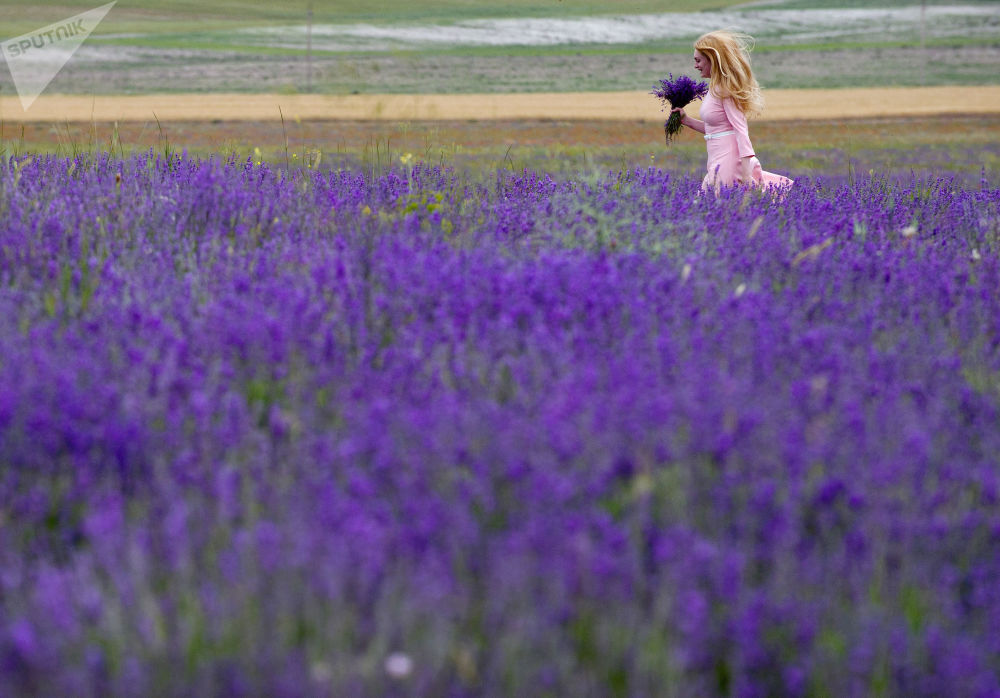 Mulher caminha por um campo de flores na Crimeia