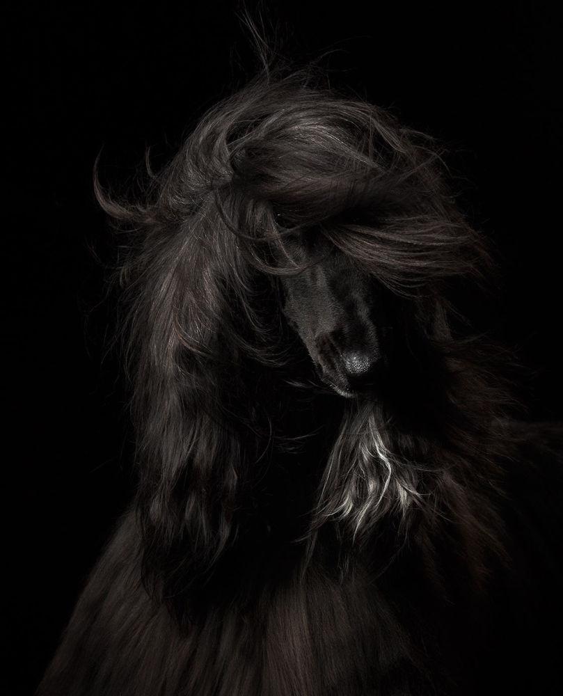 Beleza preta, vencedor na categoria retrato