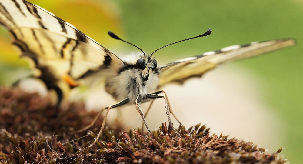 A borboleta