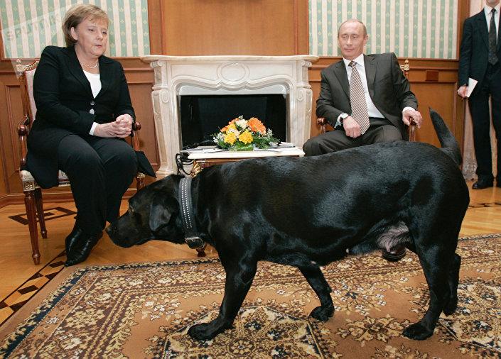 Chanceler da Alemanha Angela Merkel e presidente da Rússia Vladimir Putin durante um encontro na residência em Sochi Bocharov Ruchei