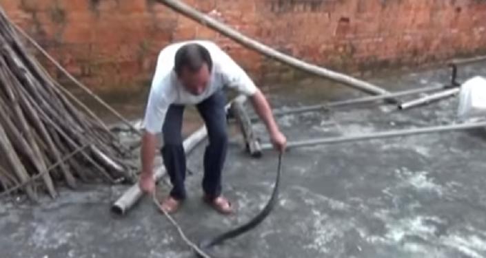 Grande serpente venenosa encontrada num quarto na China