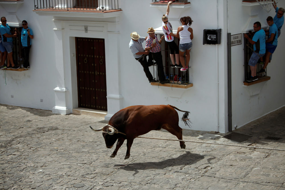 Festival popular Toro de Cuerda, Grazalema, Espanha