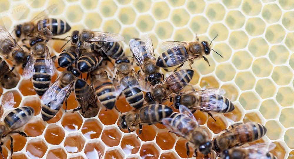 Grupo de abelhas está fazendo mel