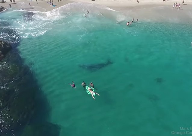Baleia-cinzenta nas águas de Dana Point Harbor na Califórnia