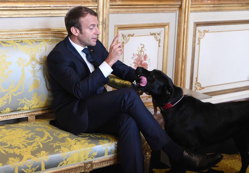 Presidente da França, Emmanuel Macron, com seu cachorro Nemo