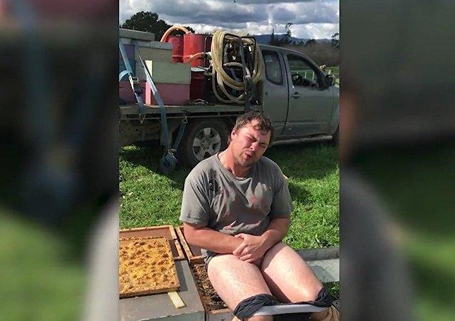 Jamie Graingero, apicultor de 27 anos de idade, resolveu cumprir o desafio dado por um amigo no qual deveria se sentar por 30 segundos em uma colmeia (Matamata, na Ilha Norte, Nova Zelândia)