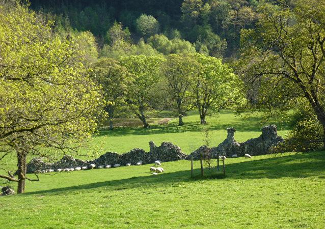 Ruínas da abadia de Cwmhir