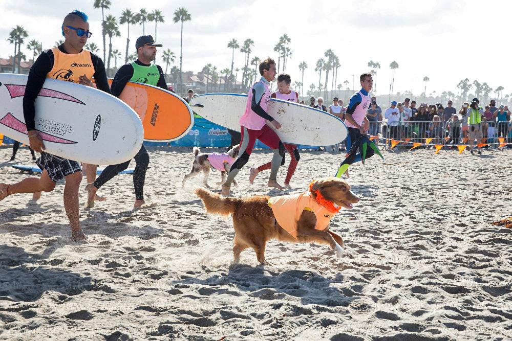 Os cães devem entrar na água acompanhados de seus donos.
