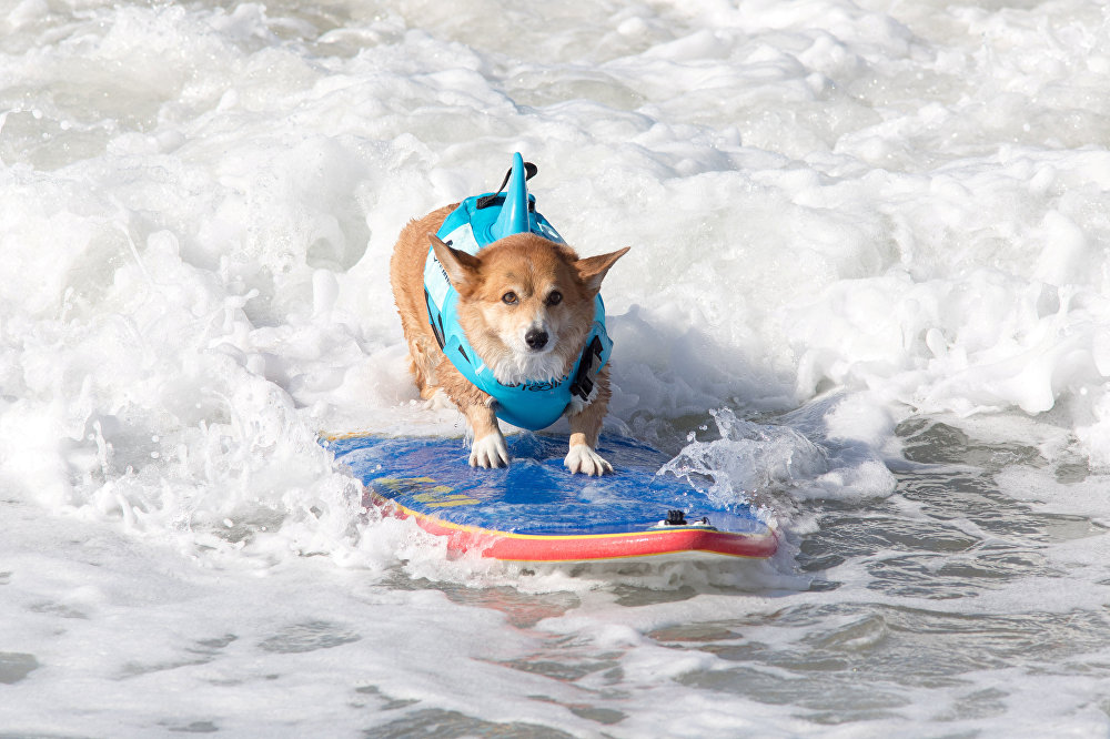 JoJo vivendo a vida sobre as ondas.