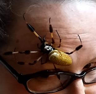 Aranha no rosto de mulher