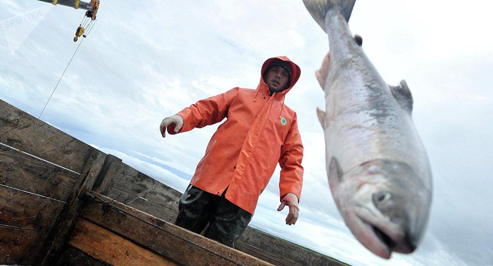 Pesca  (imagem referencial)