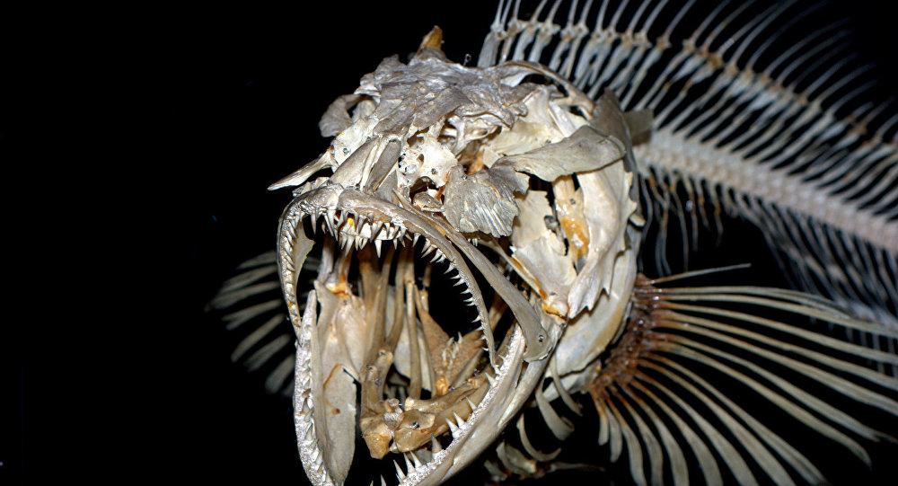 Monstros Mais Obscuros Encontrados Nas Profundezas Marinhas Fotos